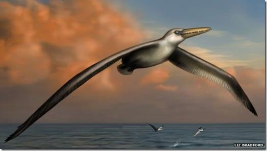The largest flying bird ever